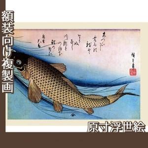 歌川広重「魚づくし 鯉」【原寸浮世絵】