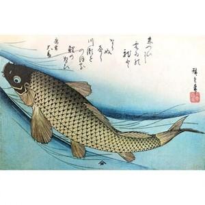 歌川広重「魚づくし 鯉」【額装向け複製画】