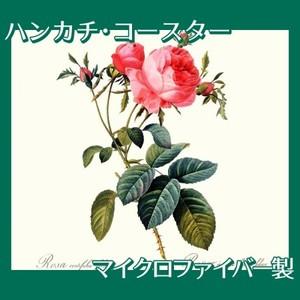 ルドゥーテ「ロサ・ケンティフォリア・フォリアケナ」【ハンカチ・コースター】
