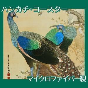 今尾景年「孔雀」【ハンカチ・コースター】