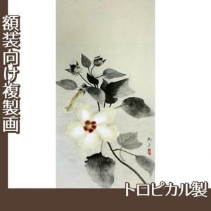 速水御舟「白芙蓉」【複製画:トロピカル】
