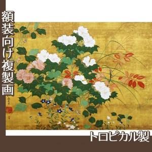 酒井抱一「秋草花卉図」【複製画:トロピカル】