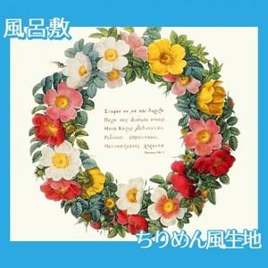 ルドゥーテ「バラ図譜の口絵」【風呂敷】