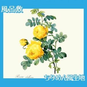 ルドゥーテ「ロサ・スルフレア」【風呂敷】
