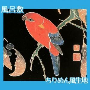 伊藤若冲「花鳥版画(六枚) 二.櫟に鸚哥図」【風呂敷】