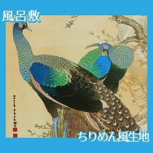 今尾景年「孔雀」【風呂敷】