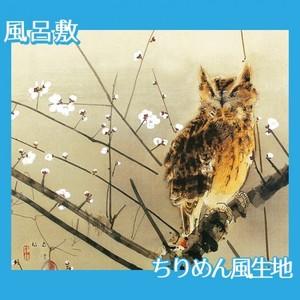 西村五雲「寒梅」【風呂敷】