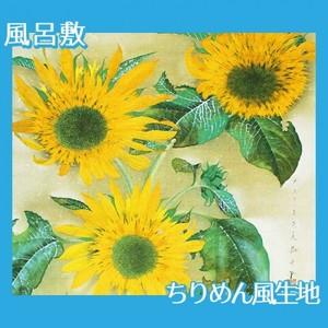 速水御舟「向日葵(本制作)」【風呂敷】