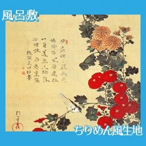 酒井抱一「菊に小禽図」【風呂敷】