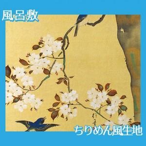 酒井抱一「桜に小禽図・柿に小禽図(右隻)」【風呂敷】