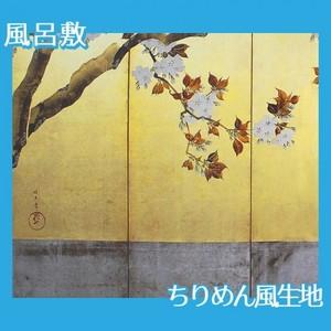 酒井抱一「桜図屏風(左隻)」【風呂敷】
