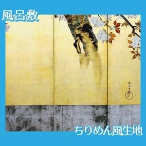 酒井抱一「桜図屏風(右隻)」【風呂敷】