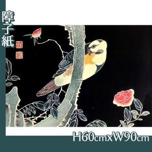 伊藤若冲「花鳥版画(六枚) 三.薔薇に鸚哥図」【障子紙】