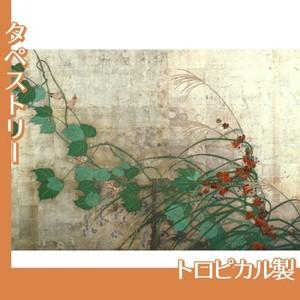 酒井抱一「夏秋草図屏風(左隻)」【タペストリー:トロピカル】