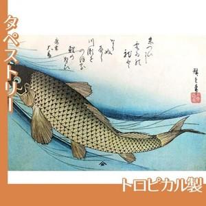 歌川広重「魚づくし 鯉」【タペストリー:トロピカル】