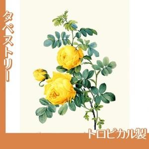 ルドゥーテ「ロサ・スルフレア」【タペストリー:トロピカル】