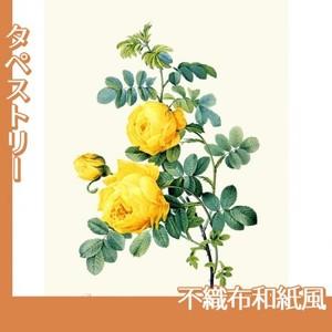ルドゥーテ「ロサ・スルフレア」【タペストリー:不織布和紙風】